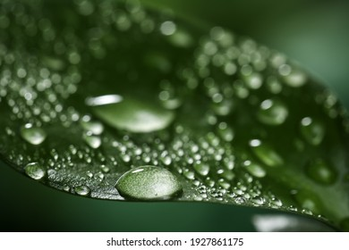 Closeup view of beautiful green leaf with dew drops