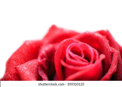 close-up view of beautiful red rose with water dew drops and heart bokeh, soft blur focus.