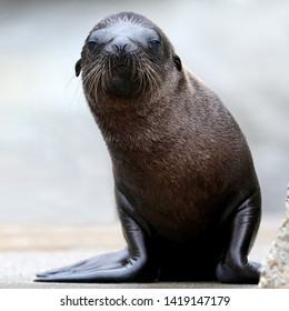 close-up view of beautiful sea lion looking at camera in zoo