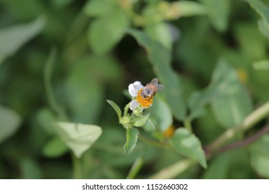 close-up view of a bee gathering nectar from flowers in a garden