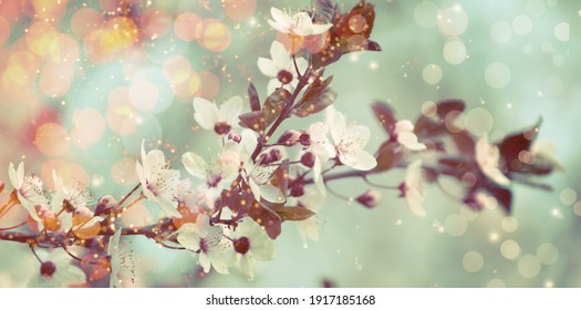 Closeup view of blossoming tree outdoors on spring day, banner design