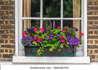 Closeup view of brick yellow wall by window potted plant in aged weathered basket pot outside on window sill with lavender, blue salvia and geranium colorful flowers in Chelsea, London UK