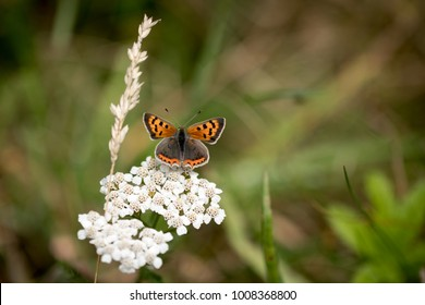 Close-up view of butterfly pollinating flower