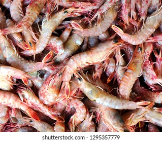 A closeup view of a catch of fresh prawns