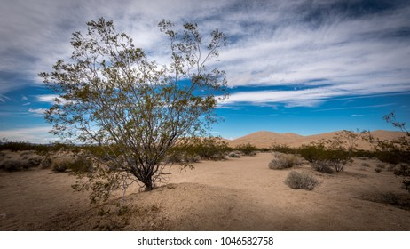 Closeup view of a creosote bush in the desert landscape at the Mohave National Preserve in Kelso, California