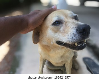 Closeup view of cute dog in blurred background, coddling a rural innocent dog, pet lovers, dog is my best friend, my life partner puppy dog so cute female nice love, innocenly looking domestic pet