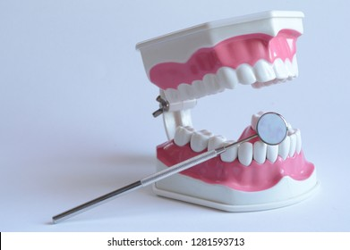 Closeup view of a dentists tooth and jawbone plastic model with a mirror tool.