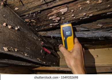 A closeup view of a digital moisture detector showing damp in rotting timber floor planks and beams, showing 17.5 percent with visible lignicolous fungi.