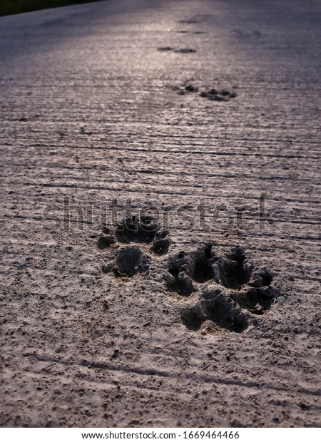 A closeup view of dog paw prints left in concrete pathway. Selective focus. Natural background. Accidental art.