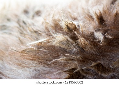 Closeup view of the felted dog brown hair of Siberian Husky dog. Severe matting and unhealthy neglected coats requiring immediate action and removal to allow the relief of suffering and discomfort.
