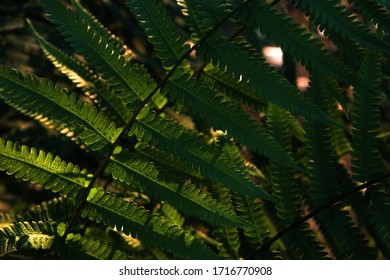 Close-up view of fern leaf with light and shadow
