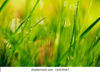 Closeup view of fresh green grass with drops in the morning.