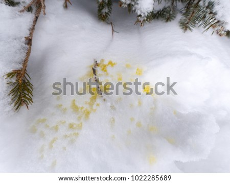 Pee in the snow