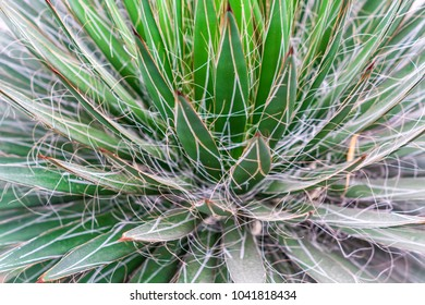 Closeup view of green cactus as a background