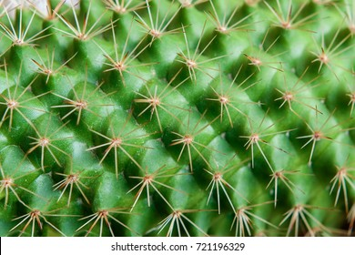 Closeup view of green cactus as a background (top view, texture)