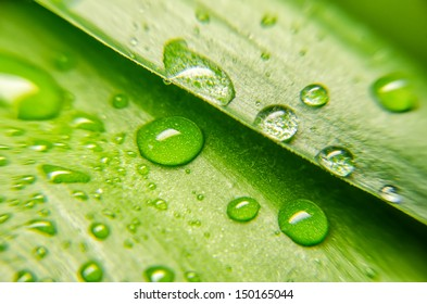 Closeup view of green leaf with water drops