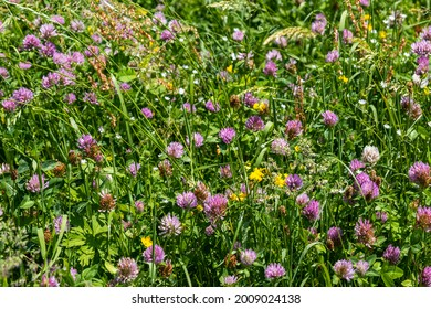 close-up view of a green meadow with assorted plants with various colors