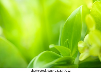 Closeup view of green orchid leaf under sunlight for natural and freshness wallpaper concept