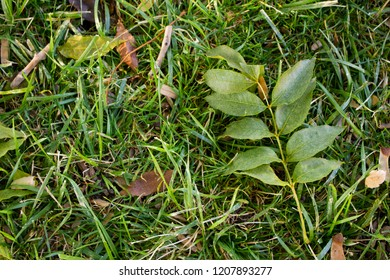 Close-up view of the ground with green leaves and grass
