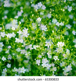 closeup view of gypsophila flower, suitable for background