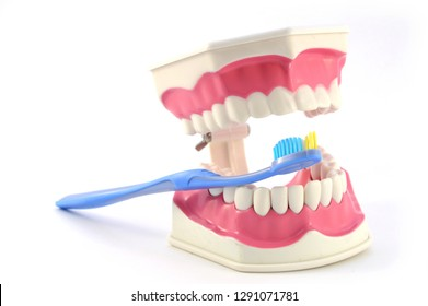 Closeup view of a healthy set of teeth and a toothbrush for dentistry concepts.