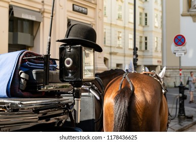 Closeup view of horse back in carriage in Vienna.