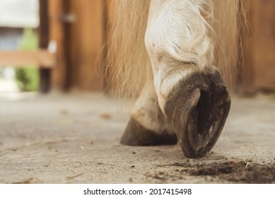 Close-up view of horse hoof just being cleaned. The dust from the hoof can be seen on the ground. Palomino horse leg view. Low angle shot.