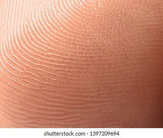 Closeup view of human finger. Friction ridge pattern