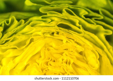 A closeup view into a fresh green lettuce.