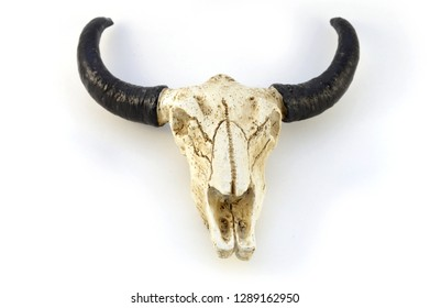 A closeup view of an isolated bull skull and horns.