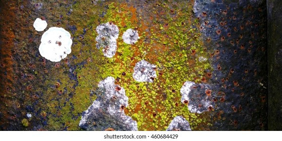 A closeup view. Lichens and mosses grow on an iron panel.