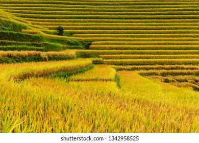 Close-up view of lines, textures, and colours of the rice paddies, Sapa, Vietnam