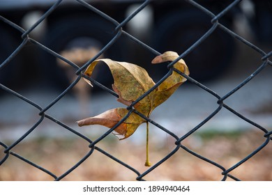 Close-up view of a lonely yellow leaf stuck in a fence. Autumn in the city park. The background is blurred.
