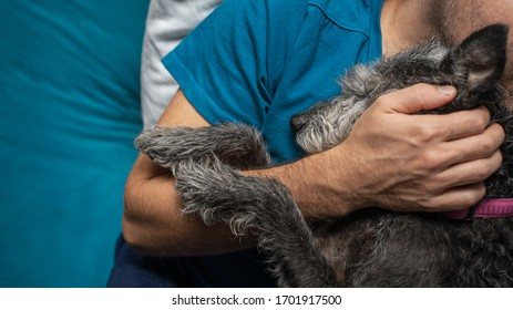 Closeup view of mixed breed black and grey pet dog cuddling with her owner.