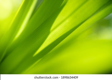 Closeup view of natural green leaf in garden against green blur background and sunlight with copy space using as background natural cover page concept.