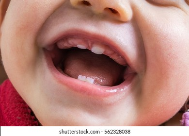 Closeup view on open mouth of baby. First teeth growing.