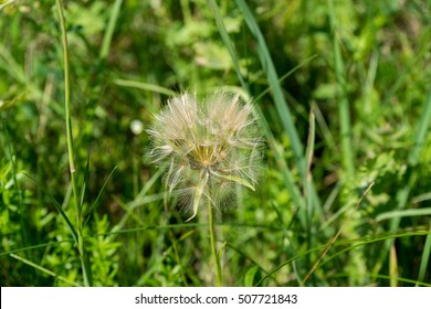 Close-up view on sunny dandelion against blurred green background