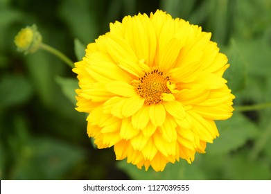Closeup view of one of the yellow garden flowers.