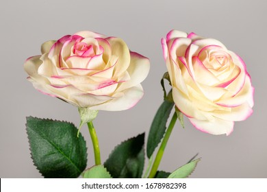 Closeup view photography of colorful pastel synthetic flowers look like real fresh roses.