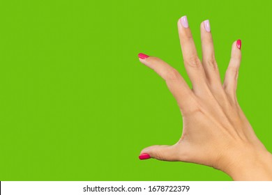 Closeup view photography of one beautiful manicured adult female hand making gesture as if holding something big in her two fingers isolated on empty green background.