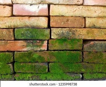 Closeup view of red brick wall with natural green mos and selective focus