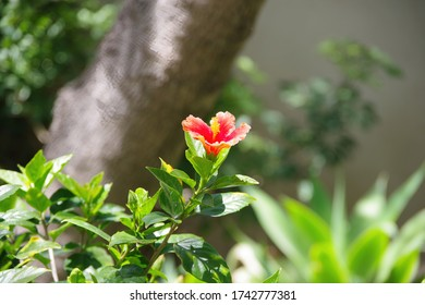 Close-up view with selected focus of a single blossom of a rhododendron bush