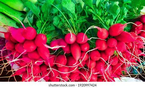 Closeup view showing group of  freshly harvested Radish, Mooli, Raphanus Sativus ,root vegetable plants displayed by street vendor for sale