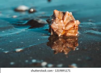 Closeup view of single sea shell on the beach. Adriatic sea. Venice, Italy