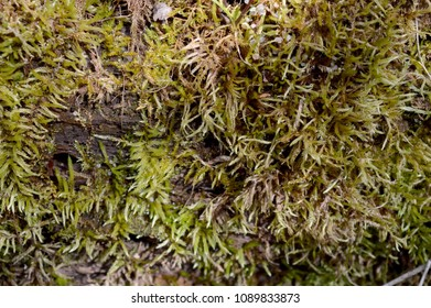 Closeup view of some green moss growing on the side of a dead tree log.