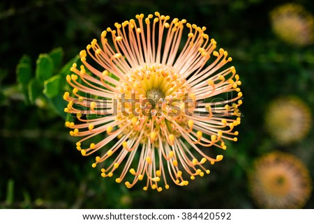 Closeup View Spindly Flower Dark Blurry Stock Photo Edit Now