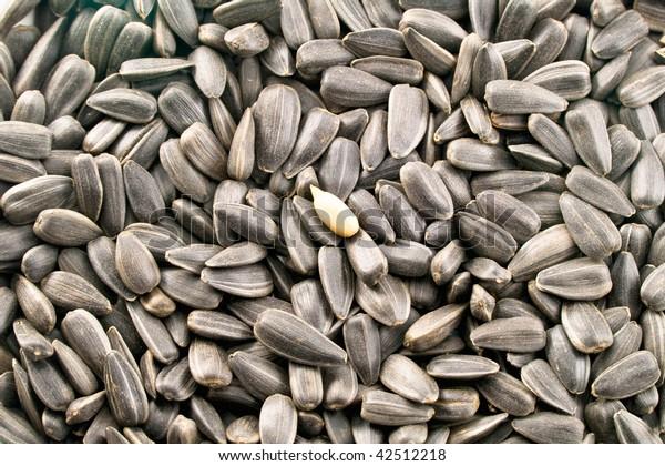 Closeup view of sunflower seeds