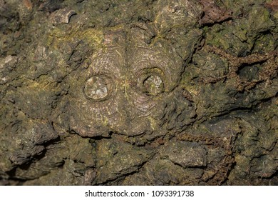 Close-up view of a tree bark (with a face).