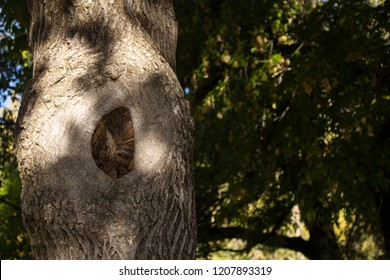 Close-up view of a tree trunk with a knot in shadow