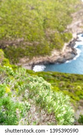 Close-up view of the UNESCO world heritage site protected flora in Erskine Valley near Mount Gower on Lord Howe Island, New South Wales, Australia. Coastline with ocean in background.